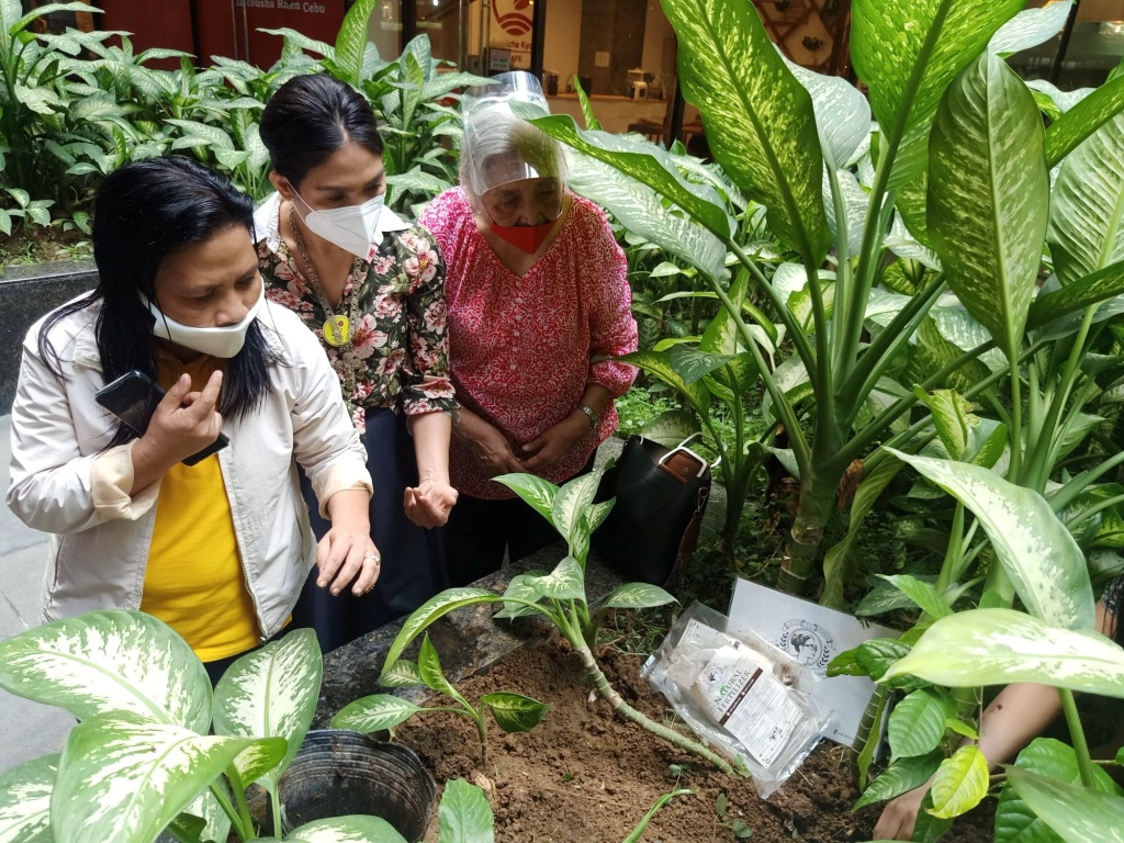 D:\2020 DESKTOP FILES\chocolate queen\PHOTOS\FEATURED ARTICLES\14 - CACAO TREE PLANTING\4.jpg