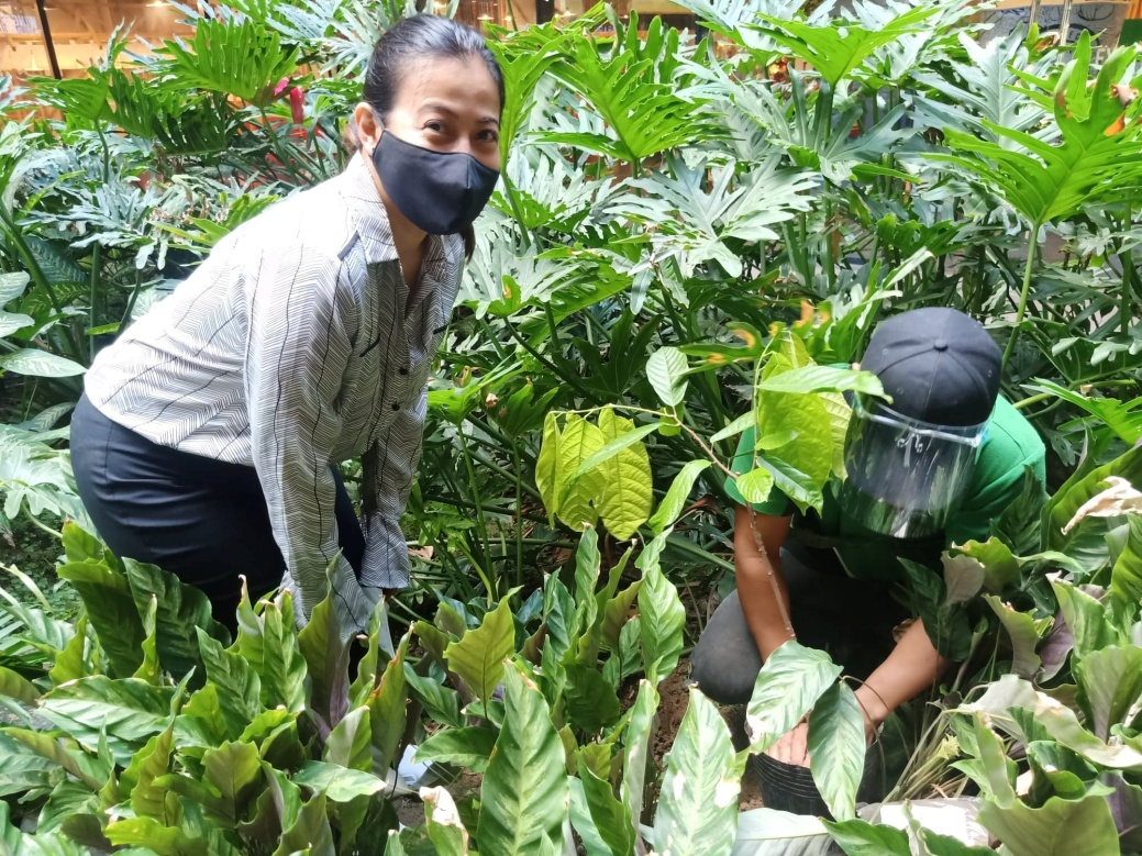 D:\2020 DESKTOP FILES\chocolate queen\PHOTOS\FEATURED ARTICLES\14 - CACAO TREE PLANTING\5.jpg