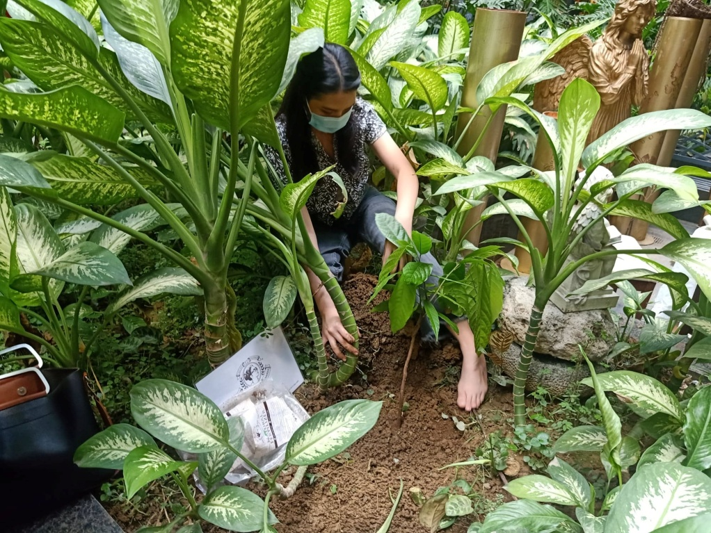 D:\2020 DESKTOP FILES\chocolate queen\PHOTOS\FEATURED ARTICLES\14 - CACAO TREE PLANTING\2.jpg